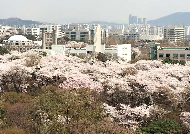 春には桜が満開。有名なお花見スポットです。