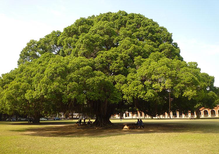 この木なんの木。。。